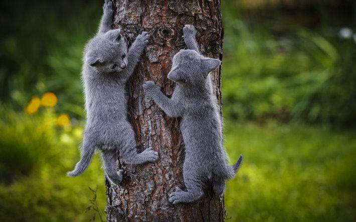 Scarica sfondi legno, grigio gatti, gattini, piccolo grigio gattini simpatici animali