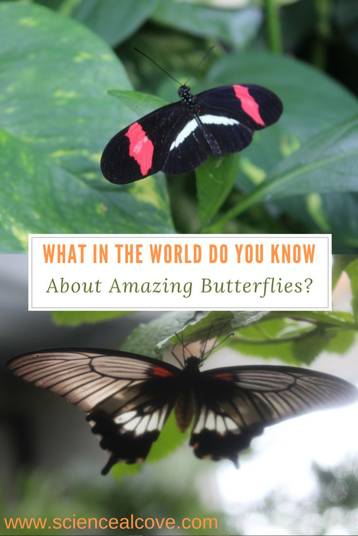 What in the World do you Know About Amazing Butterflies? What do you know about amazing butterflies? I bet you know more than you think. Take this short quiz and you may surprise yourself about how much you know about these beautiful insects.#science #sciencequiz #butterflies #insects