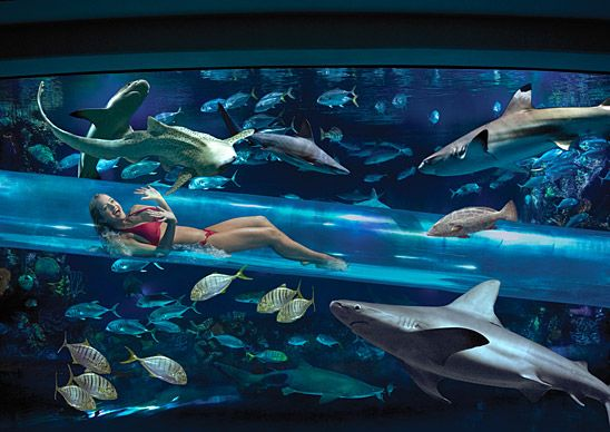 Swim with Sharks in the Golden Nugget's Swimming Pool, Las Vegas ♥