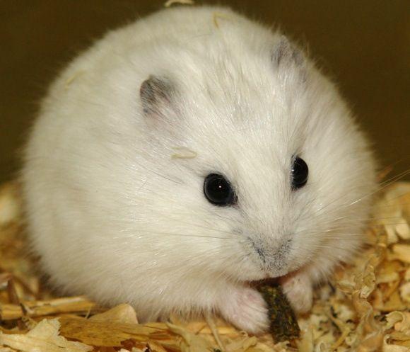 I love hamsters!