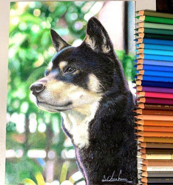 色鉛筆で描くリアルな犬がsnsで大反響 注目を浴びた高校生の今後が気になる いぬのきもちweb magazine 犬 絵 色鉛筆 色鉛筆画