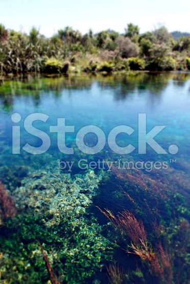 Clear Water, Pupu Springs, Takaka, New Zealand royalty-free stock photo
