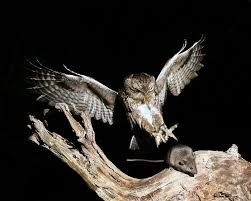 Kuvahaun tulos haulle ornitologi