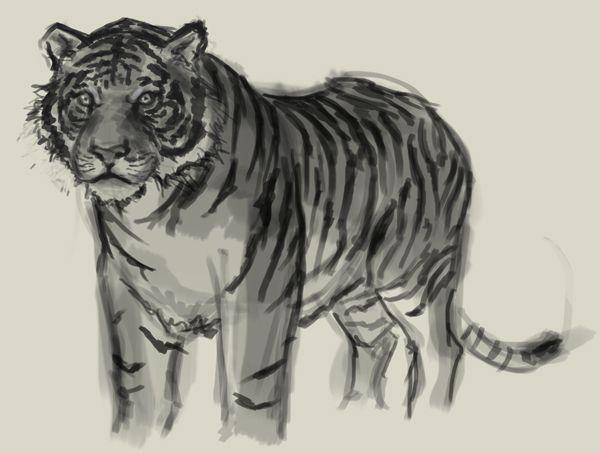 Tiger Drawings Tumblr | www.pixshark.com - Images ...