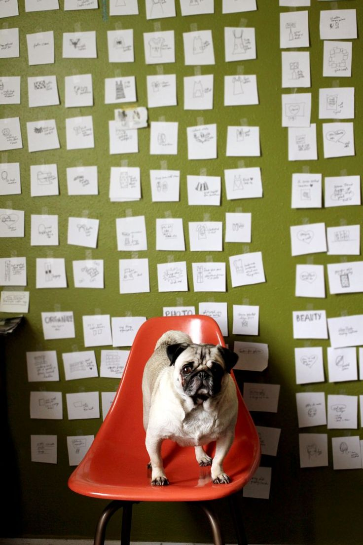 Blog planning with little notes on a wall (on A Beautiful Mess): Lovable Pug, Note Planning, Animal Kingdom, Dog Runs, Blog Post, Art Room, Note Cards, Notecards