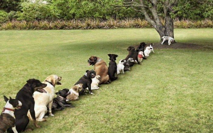 jeesmies-vessajono-hauskat-koirakuvat-hupikuvat-huumorikuvat