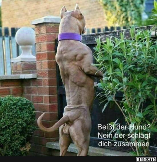 Beißt der Hund? Nein der schlägt dich zusammen..