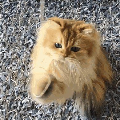 Sanatlı Bi Blog Dünya'nın En Fotojenik Kedisi Smoothie ile Tanışın 28