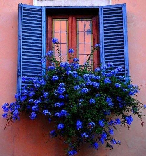 window-planter-box-pretty