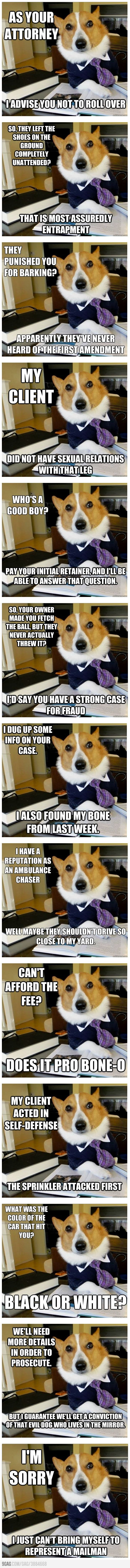The Best Of The Lawyer Dog Meme - about to cry this is so funny