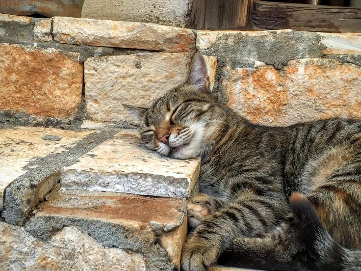 """After I had lunch in the beach town of Kas, on the southwestern point of the country, it seemed like everyone was ready for a nap, including this fellow."" - by y Christopher Muther"