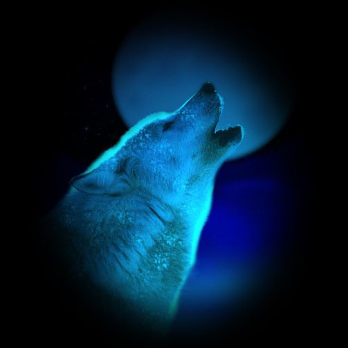 17 Best images about WOLVES on Pinterest | Wolves, Arctic ...