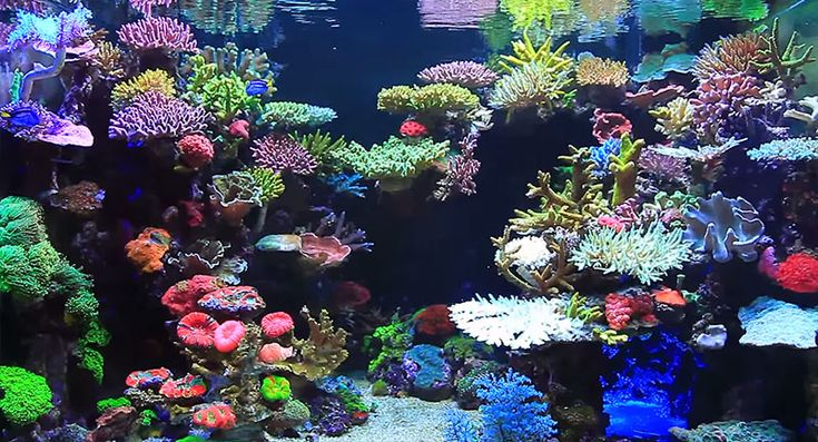 "Video still from Youngil Moon's video ""Reef Tank Aquarium"""