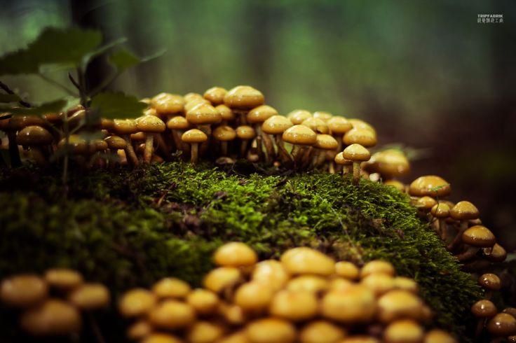 Mushrooms in Teutoburger Wald near Bielefeld Ostwestfalen NRW Deutschland  Photography about the city of Bielefeld, at the Teutoburger Forest in Ostwestfalen, Germany.   Fotografie   Stadt Bielefeld   Teutoburger Wald   Ostwestfalen   Deutschland http://tripfabrik.de/bielefeld http://tripfabrik.de/flug-bielefeld #bielefeld #deutschland #germany #ostwestfalen #teuto #tripfabrik #teutoburger #wald #fotos #mushrooms #pilze #pilz #nature #landscape #trekking  http://tripfabrik.de