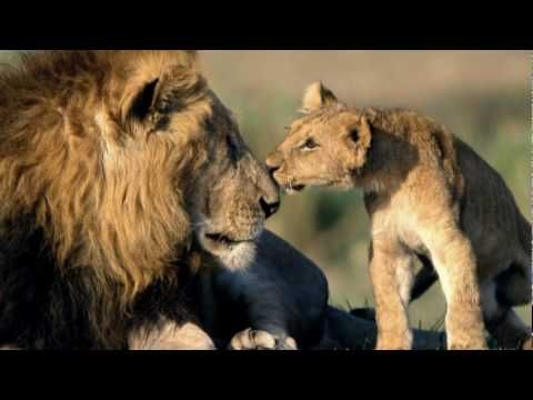 Remember this one? Born Free by Matt Monro from the soundtrack for the 1966 hit movie Born Free - the song won Best Song at the Academy Awards and John Barry won best musical score that year at the Oscars as well. Have not seen this film in eons.
