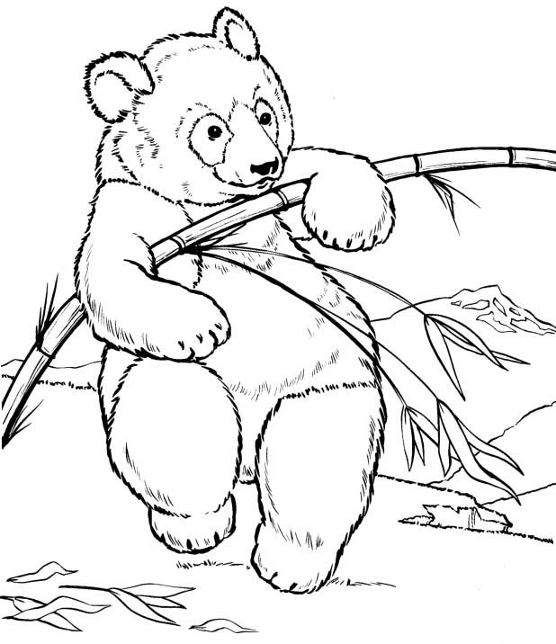 young bear coloring page