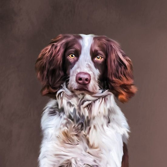 #English #Springer Spaniel #Dog Oil #Painting #Portrait #animal #pet #dogphoto #doglovers #