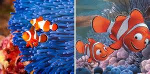 Sheldon - Finding Nemo - - Yahoo Image Search Results