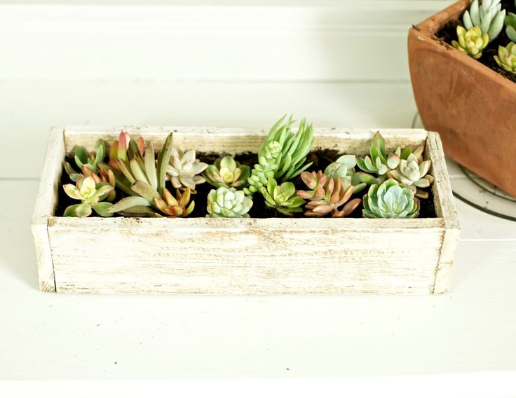 cute little indoor succulent garden garden planning pinterest