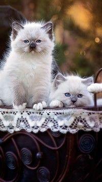 Dwa kocięta w wózeczku