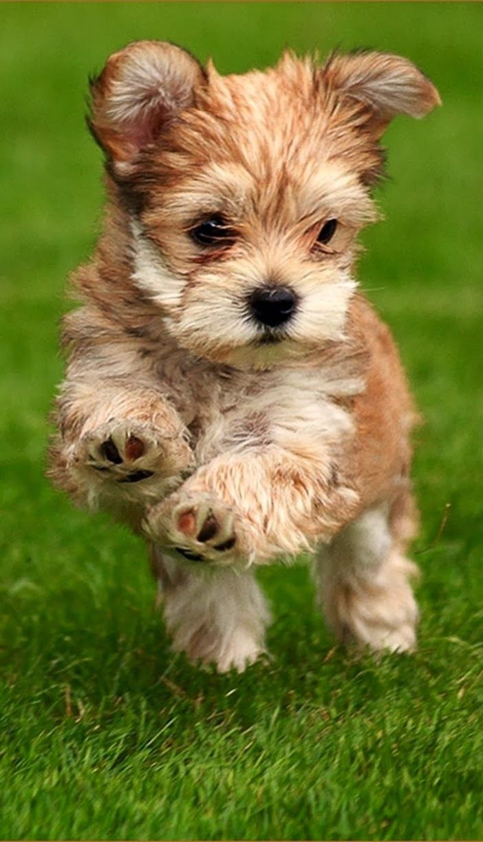 5 fluffiest puppies you have ever seen, pic#03