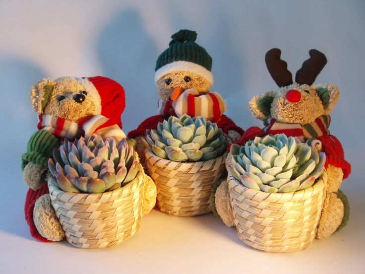 Fantastic Shelf Life! super hardy succulents in woven basket held by adorable Straw Teddy Bears in Christmas themed outfits!  A proven winner every Christmas! http://www.summerhillnurseries.com.au/www/content/default.aspx?cid=1793&fid=670