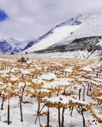 EL CHILE EXTREMO  Y LAS CEPAS NO TRADICIONALES es el nuevo curso que trae The Wine School Chile para ti. El 24 de Octubre de 19:00 a 22:00hrs el profesor Nicolas Farias Torres nos trae este excelente curso apto para todo público. Para inscribirte y recibir más información visita el link llámanos al 56 2 2372 2985 o escríbenos a paula@thewineschool.cl #Cursos #Vino #Chileno #Viñas #Cata #Desierto #Patagonia #Cordillera#Costa