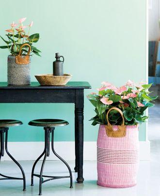 """Die Anthurie ist auch unter dem Namen """"Flamingoblume"""" bekannt. #anthurie #pflanzen #pflanzenfreude #plants #planters"""