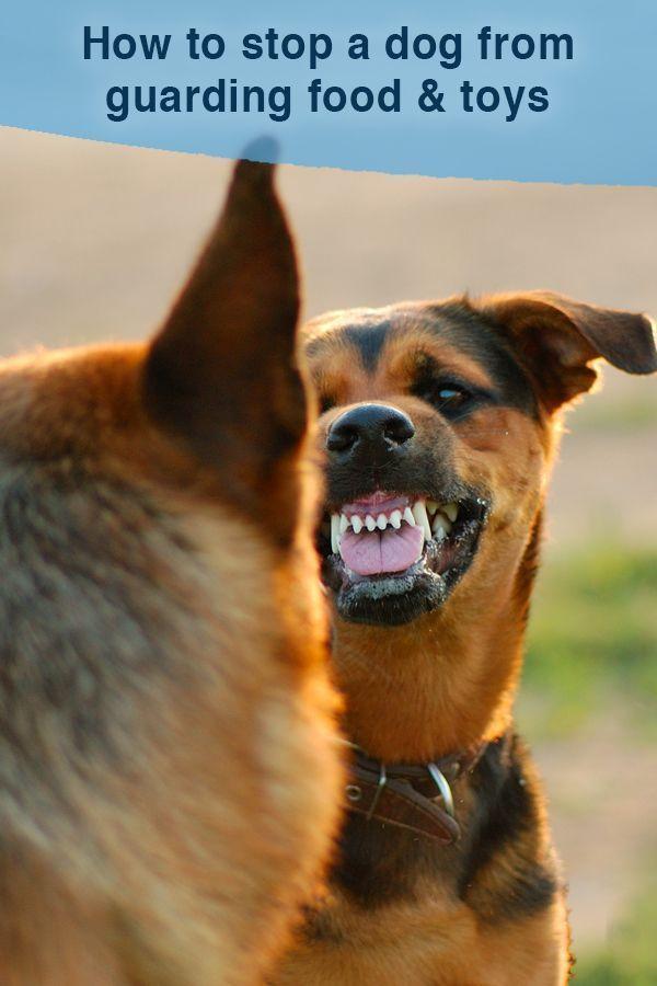 Break Dog Dog39s Food Guarding Possessiveness Stop Dogs
