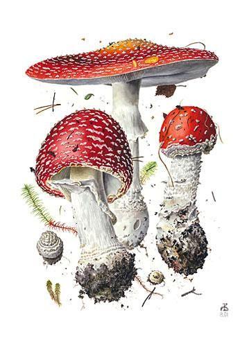 Alexander Viazmensky   American Society of Botanical Artists