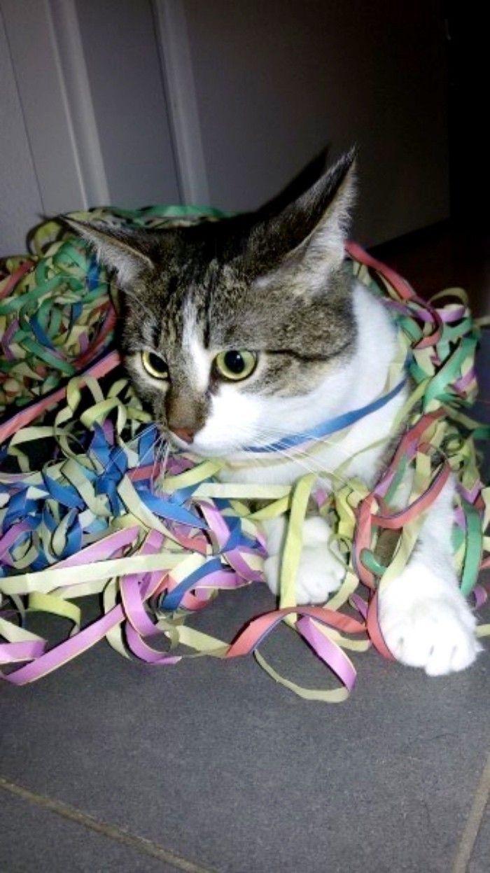 Schöne Spielmöglichkeit für Wohnungskatzen   Frag Mutti   Katzen ...