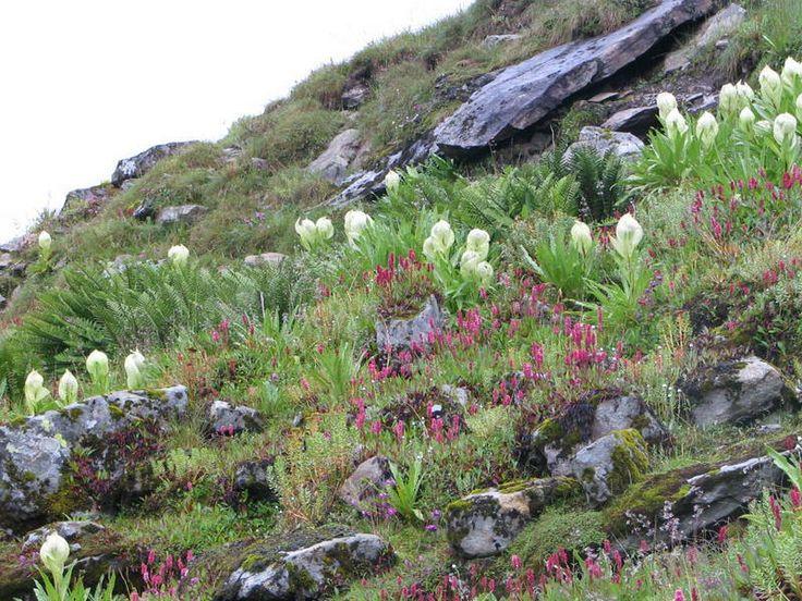 7925d1214764521-valley-of-flowers-and-hemkund-sahib-img_0246.jpg (800×600)