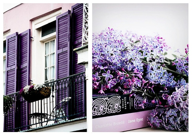 purple, new orleans, books