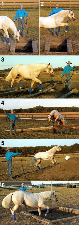 Creative Groundwork for Your Horse - gonna start teaching him to look where he's going!