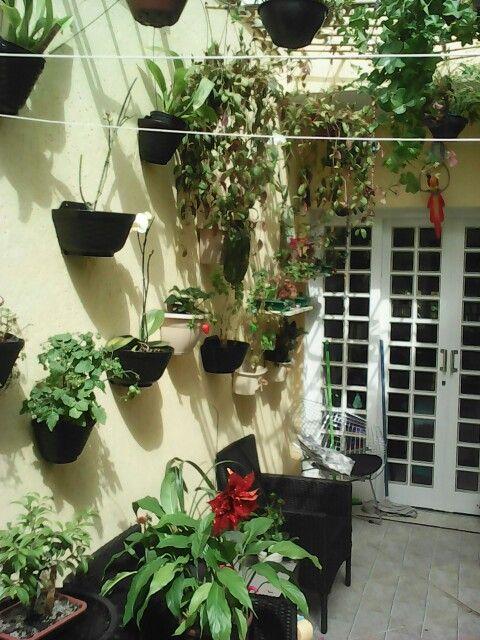 meu quintal meu jardim : meu quintal meu jardim:Meu quintal – jardim vertical