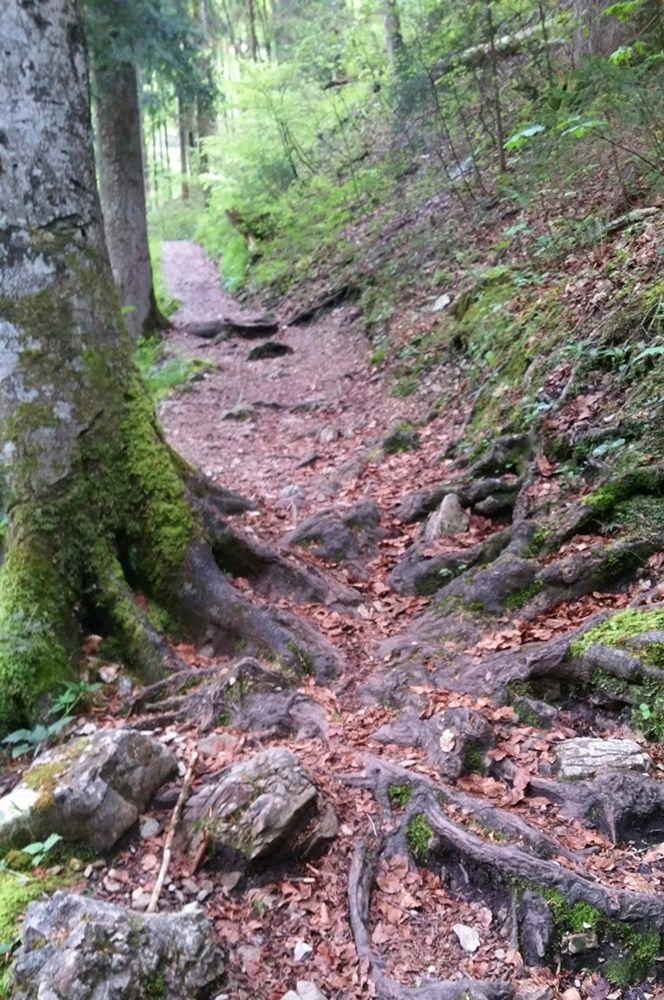Über Stock und über Steine, Radler brich dir nicht die Beine! Auf dem Weg zum Staubfall in den Chiemgauer Alpen.