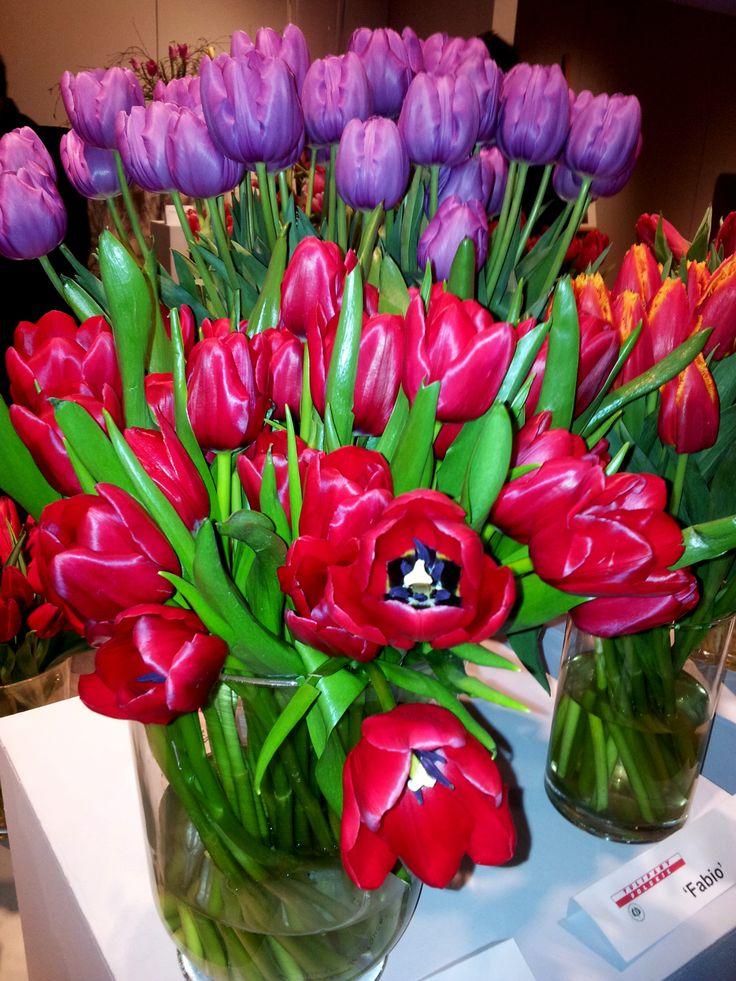 Unique de France tulips