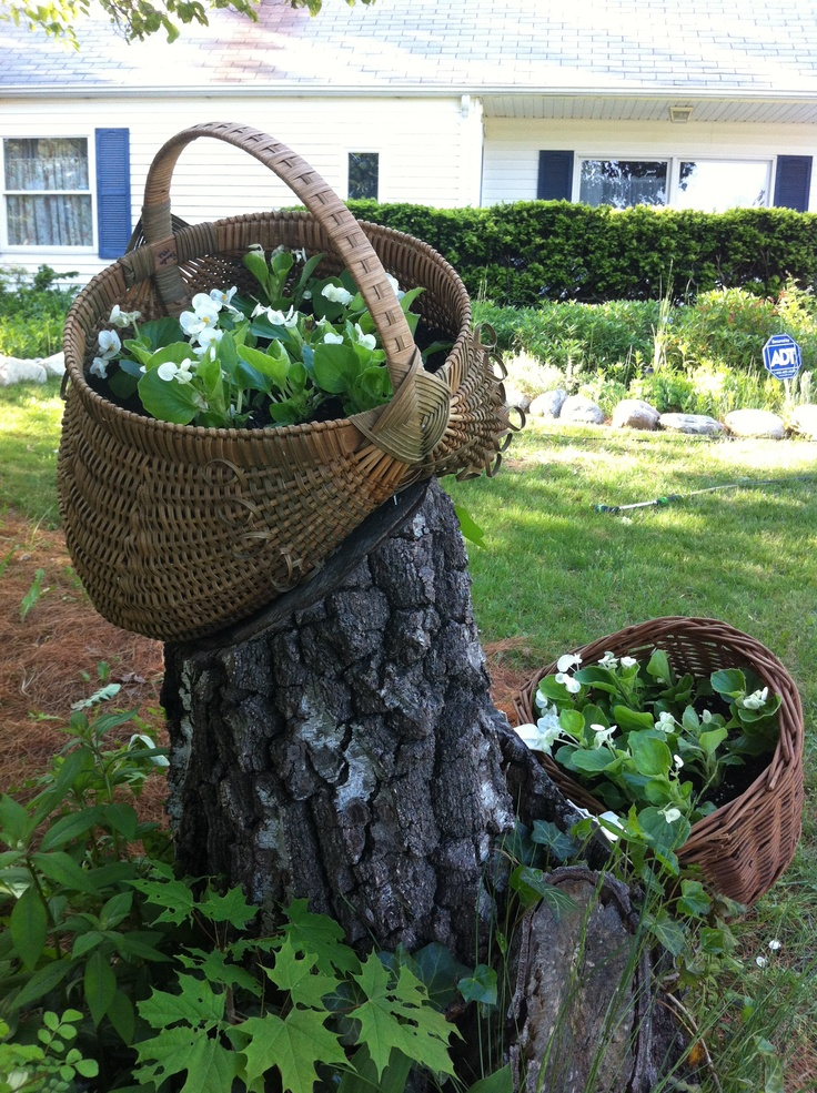 Tree stump garden tree stump ideas pinterest gardens for Tree trunk slice ideas