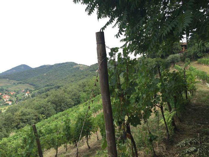 Pianora, vini biologici in Franciacorta