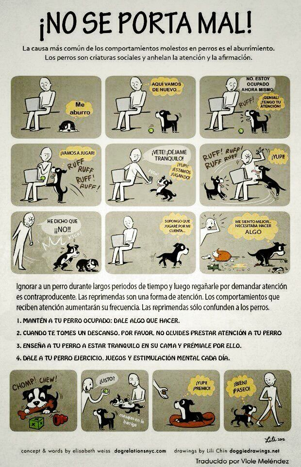 La causa más común del mal comportamiento en los perros es el aburrimiento. Consejos