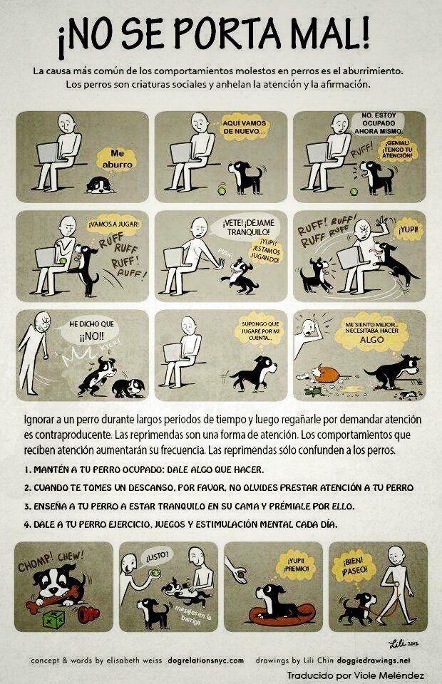 Perros mal comportamiento haciendo pis