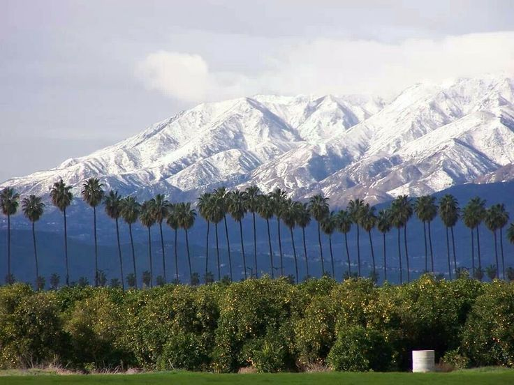 34 Best Images About Redlands On Pinterest Mansions Parks And Park In