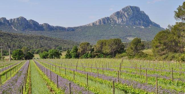 Les Vignes Buissonnières - Balade oenotouristique en Pic Saint Loup