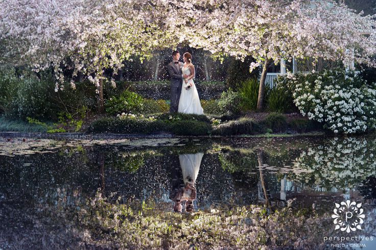 Can't wait to work at this stunning location! Sarnia Park Cherry Blossom Wedding Photos from @Perspectives Photo + Cinema