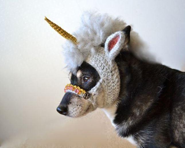 Love this unicorn DIY Halloween dog costume idea.