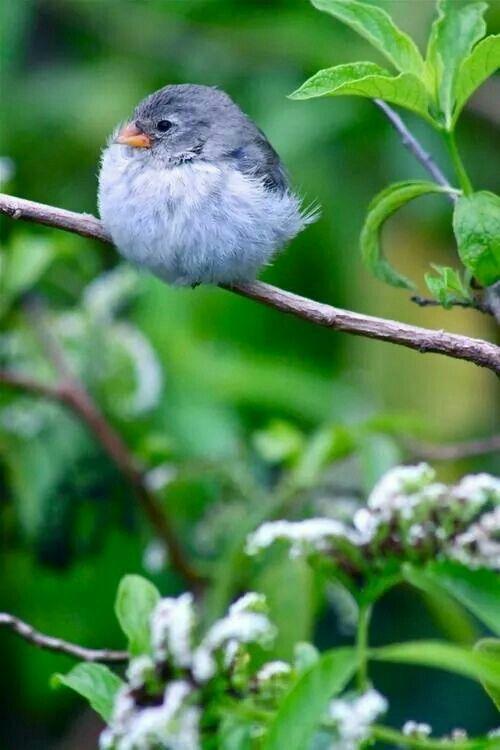 Birdie on branch