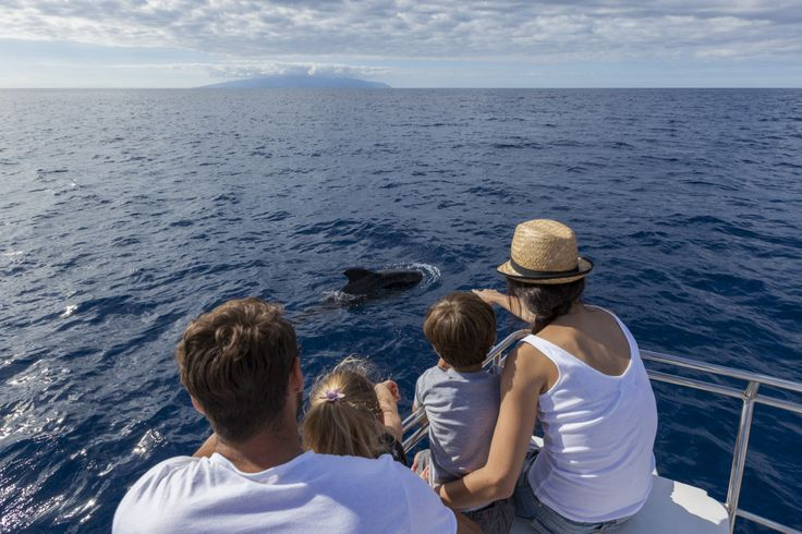 Avistamiento de cetáceos, excursión en barco, Tenerife, Islas Canarias // Whale and dolphin watching, boat trip Tenerife south, Canary Islands // Wale und Delfine beobachten, Bootsausflug, Teneriffa, Kanarische Inseln #VisitTenerife