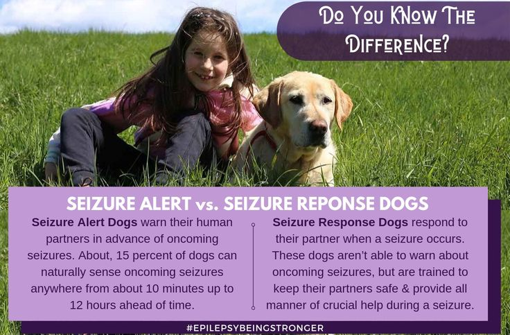 Do you know the difference between seizure response dogs