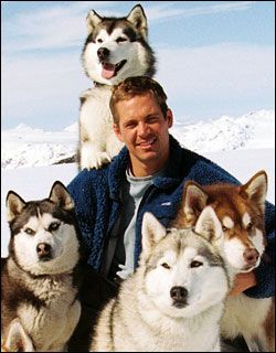 What's cuter, Paul Walker or the dogs?
