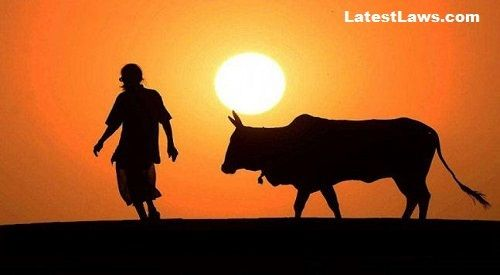 Gujarat Assembly enhances punishment for Cow Slaughter to Life imprisonment